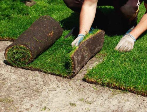 How to Care for New Sod