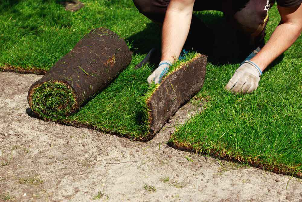 How to care for new sod tenoblog for Care for new sod
