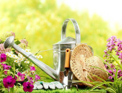 How To Prepare Your Garden For Summer